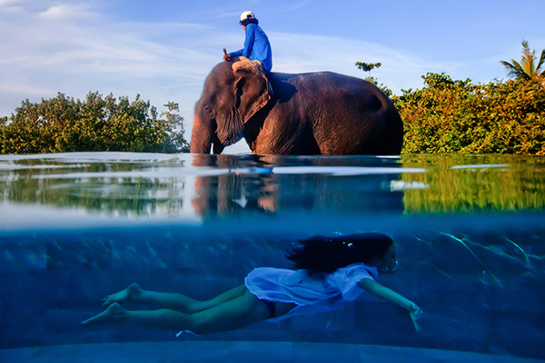 elephant and woman swimming